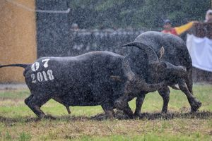 Công tác an ninh được siết chặt tại Lễ hội chọi trâu Đồ Sơn 2018
