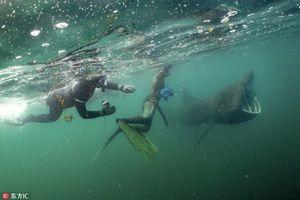 Lặng lẽ tiếp cận thợ lặn, cá mập khổng lồ gây sốc