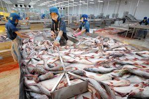 Các tỉnh bắt tay để sớm gỡ 'thẻ vàng' cho thủy sản
