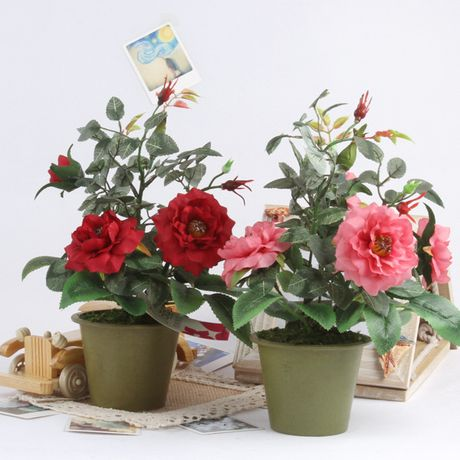 Ky thuat trong cay hoa Hong trong chau cho hoa no ruc ro quanh nam - Anh 3