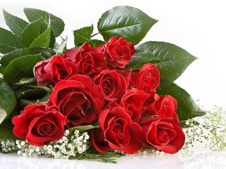 Ky thuat trong cay hoa Hong trong chau cho hoa no ruc ro quanh nam - Anh 4